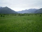 Земля в горном Алтае без посредников.